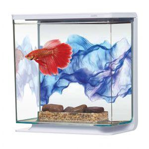 Aquarium-Betta-Kit-Voile-Bleu-3-Litres-Marina