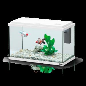 Aquarium-Funny-Fish-40-Blanc---Aquatlantis