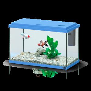 Aquarium-Funny-Fish-40-Bleu---Aquatlantis