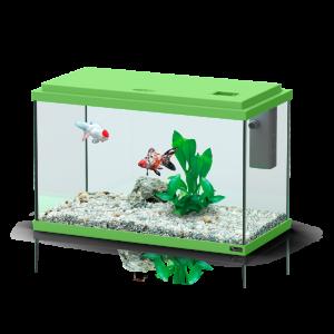 Aquarium-Funny-Fish-40-Vert---Aquatlantis