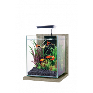 Kit-Aquarium-Jalaya-Zebrano-Gris