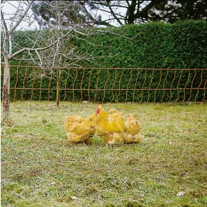 Filet-poule-50m-simple-pointe-Orange-PoultryNet
