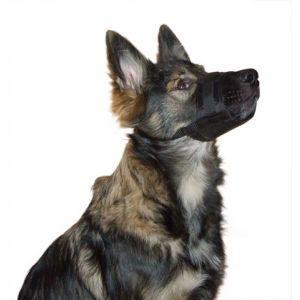 Niche-pour-chien-Natura-Taille-XL
