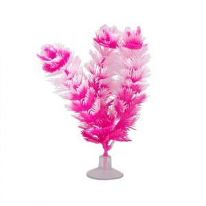 Plante-Betta-Kit-FoxTail