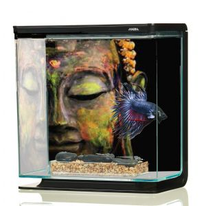 Aquarium-Betta-Kit-Bouddha-3-Litres-Marina