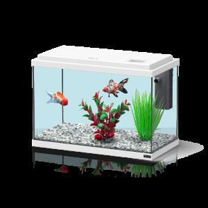 Aquarium-Funny-Fish-35-Blanc---Aquatlantis