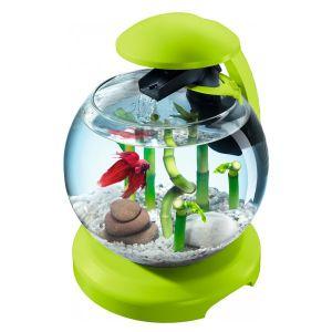 Aquarium-Tetra-Cascade-Globe-Vert