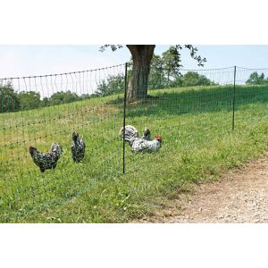 Filet-poules-15m-double-pointe-PoultryNet