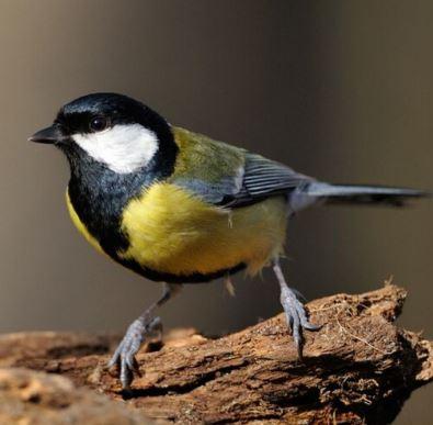 Comment prendre soin des oiseaux de la nature qui peuplent nos jardins ?
