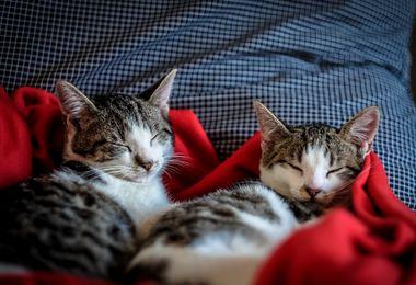 Accueillir un chaton chez soi : les accessoires indispensables pour préparer son arrivée