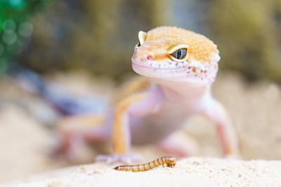 Débuter en terrariophilie : quelle espèce de reptiles choisir ?