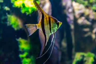 Acheter un grand aquarium : nos conseils