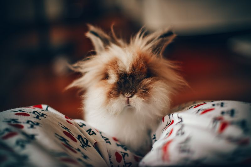 Lapin domestique : bien choisir et aménager la cage de son lapin