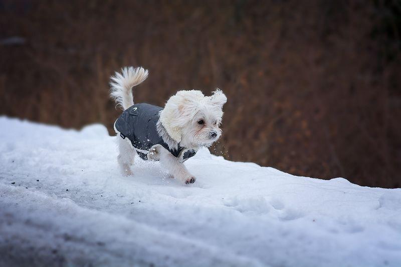 Quelle taille de niche choisir pour mon petit chien ?