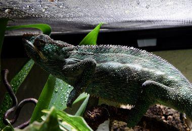 Reptiles, amphibiens : comment bien choisir son terrarium ?