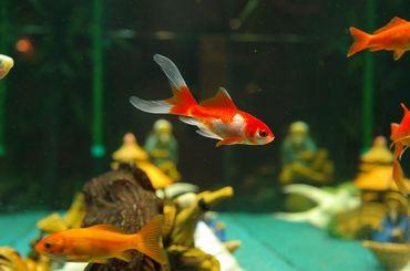 Comment bien décorer mon aquarium ?