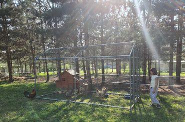 Enclos et parc à poules: comment créer un parcours extérieur à ses poules?