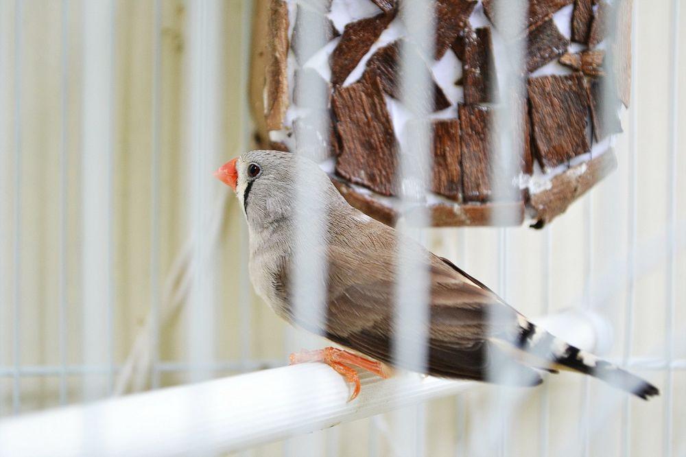 Comment nettoyer les cages de vos oiseaux et volières ?