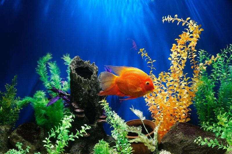 Comment entretenir et nettoyer mon aquarium d'eau douce ?