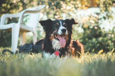 Canicule: comment prévenir et éviter le coup de chaleur à son chien?