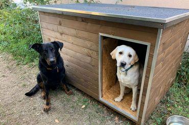 Grand chien: comment choisir sa niche?