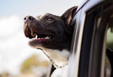 Partir en vacances avec son chien : comment le transporter en toute sécurité ?