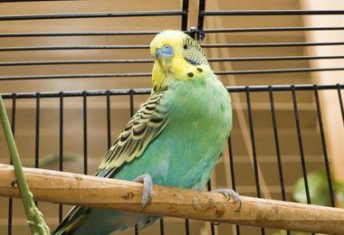 Pourquoi choisir une batterie d'élevage pour oiseaux ?