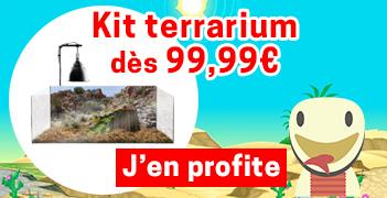 Kit terrarium complet dès 99,99€