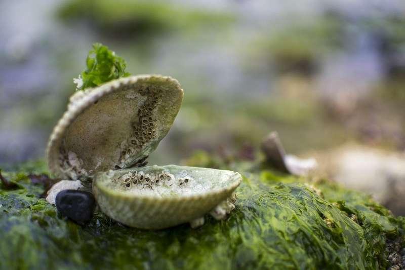 se débarrasser des algues