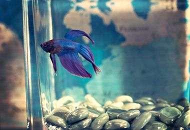Comment choisir l'aquarium pour ses poissons