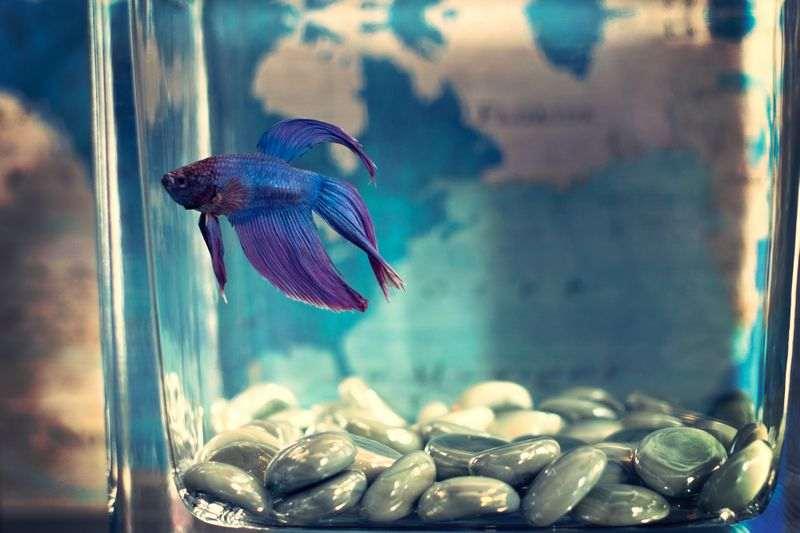 Taille, forme, volume, équipements : comment choisir son aquarium à poissons ?