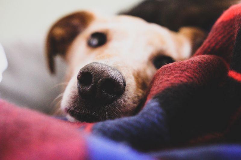 chien dans une niche confortable et chaude