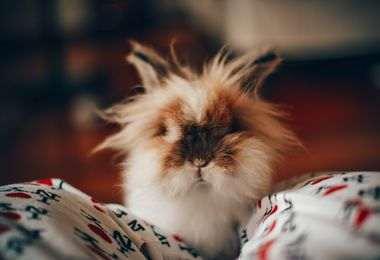 Bien choisir cage lapin