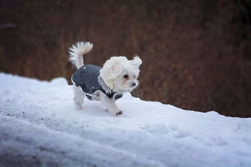 Choisir niche petit chien