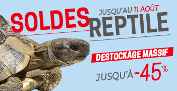 Tous les Soldes Reptile été 2020