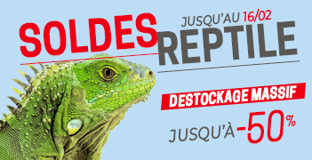 Tous les Soldes Reptile - Animal Valley