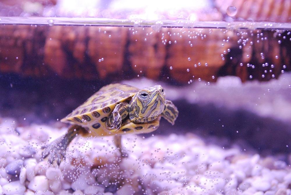 Aménager mon aquaterrarium pour ma tortue d'eau