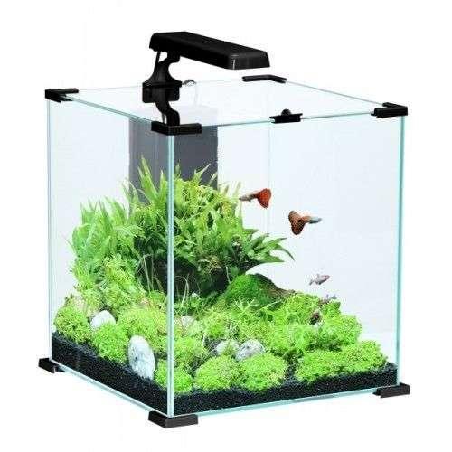 Aquarium nano cube pour combattant