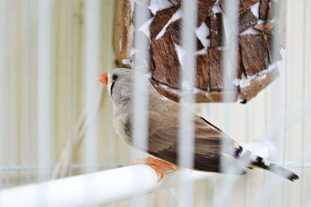 Comment nettoyer sa cage oiseau ou voliere