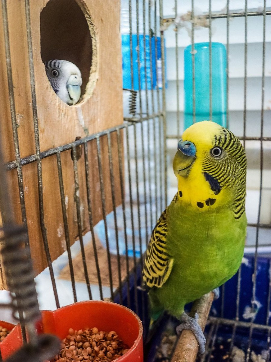 comment nettoyer cage et volière à oiseaux
