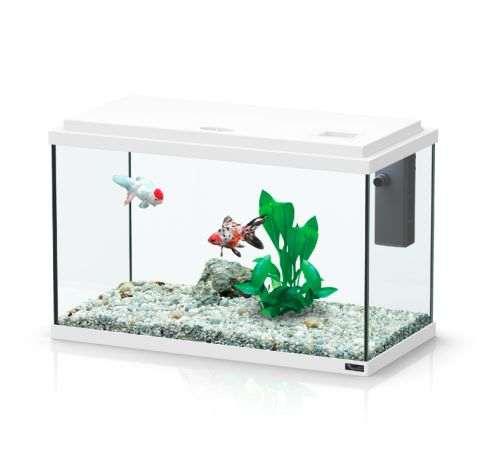 Aquarium pour combattant