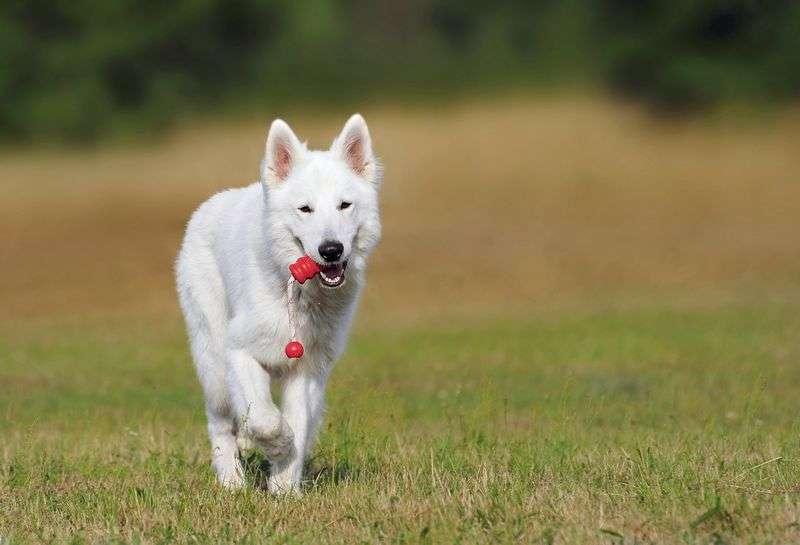 Quels équipements acheter pour faire sport avec son chien