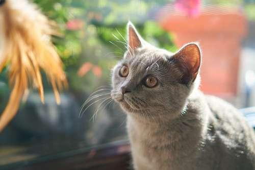 chat maison voisin