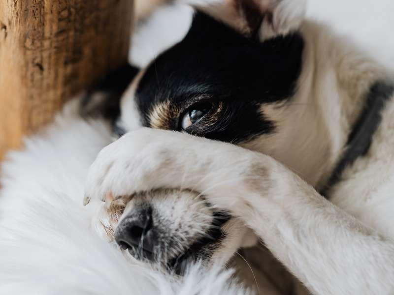 Aider un chien qui détruit tout