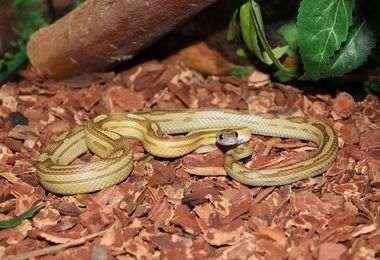 comment choisir terrarium serpent