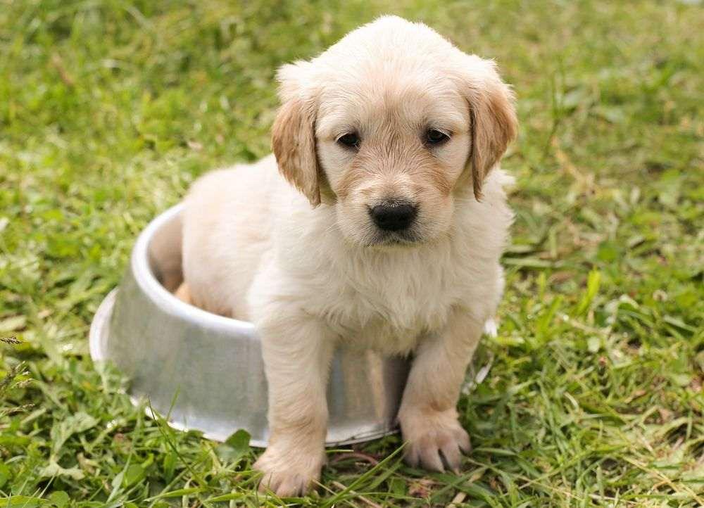 Conseils apprentissage de la propreté chez le jeune chien