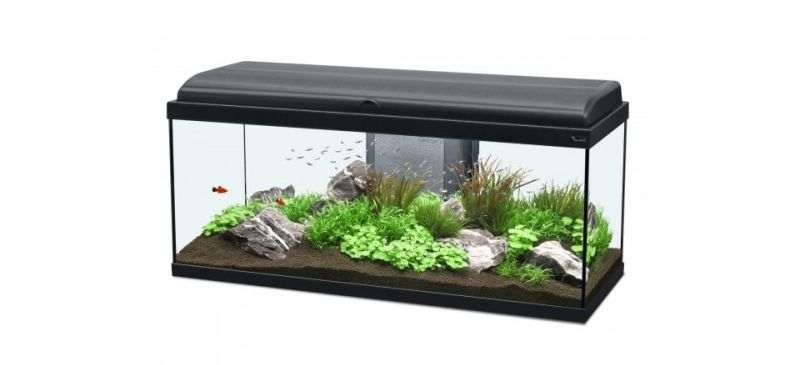 Conseils pour choisir aquarium
