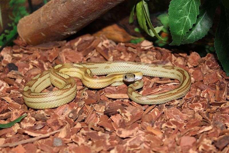Quel terrarium choisir pour mon serpent ?