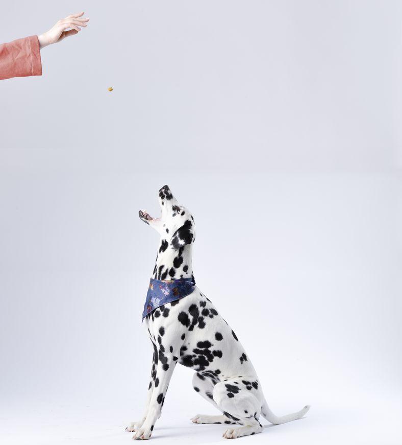 apprendre des ordres à son chien