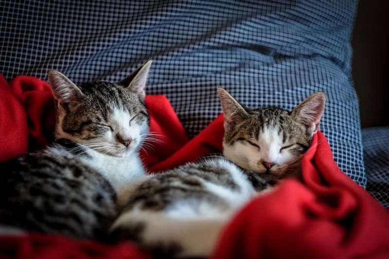 Bien choisir le couchage de son chaton